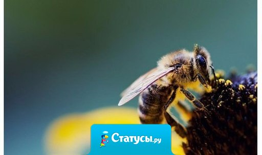Пчела, вонзив стальное жало, не знает, что она пропала... Так и глупцы, пуская яд, не понимают, что творят.