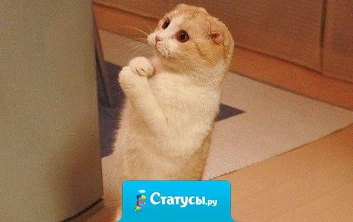 Коты и мужчины похожи... Если они вдруг становятся ласковыми, значит им или от вас нужно что-то, или уже где-то нагадили...