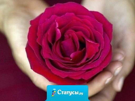 Просто хочу быть счастливой. Редко встречаться с бедой! Просто хочу быть любимой. Не оставаться одной. Просто хочу не лить слезы. От горести тяжких утрат. Просто хочу держать розы. И чувствовать их аромат!