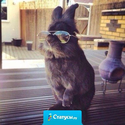 Как бы ты ни старался, ты никогда не будешь выглядеть так же круто, как этот кролик.