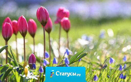 Весной дует самый что ни на есть настоящий ветер перемен, он дует так сильно, что способен принести перемены в жизнь каждого…