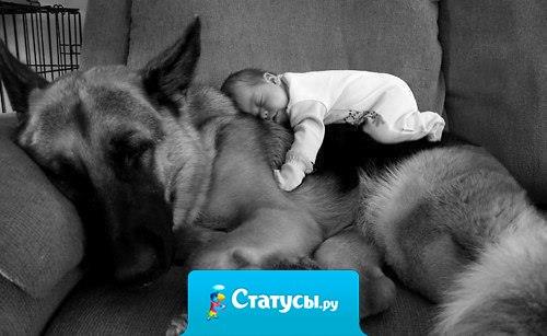 Собаке всё равно, бедный ты или богатый, образованный или не грамотный , умный или тугодум. Отдай ей своё сердце , и она ответит тем же.