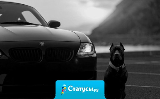 Не предает лишь автомобиль и собака.