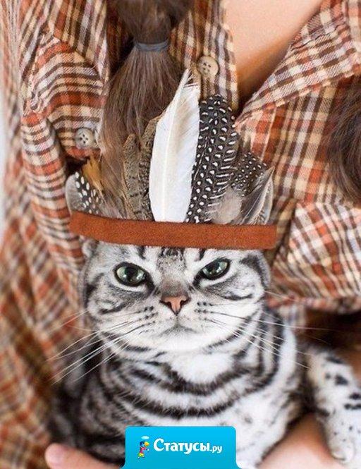 В доме, где есть кошка, других украшений не нужно.