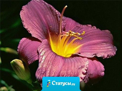 Цветку нет необходимости звать пчёл. Ему достаточно раскрыться...