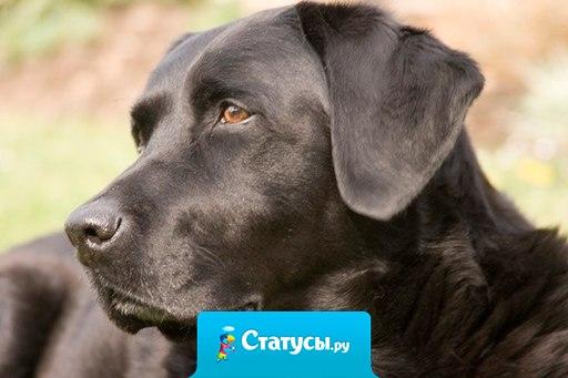 Если вы подберете на улице дворовую собаку и накормите её, она никогда вас не укусит. В этом и состоит разница между собакой и человеком...