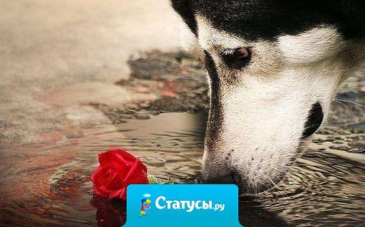 Не называйте при ссорах людей собаками. Собаки, в отличие от людей, знают, что такое верность.