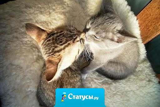 Целуйте любимых чаще!