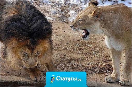 Это там... за порогом, ты - царь зверей!!! А здесь - не рычи, когда жена говорит...