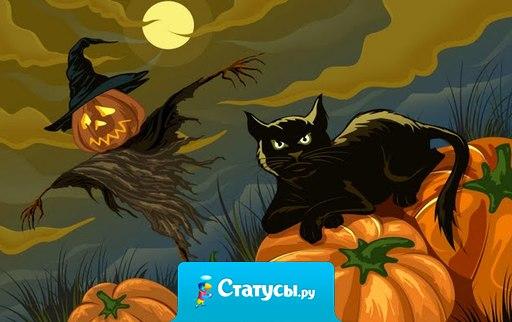 Хеллоуинский ужас - черный кот разбивает зеркало пустым ведром .
