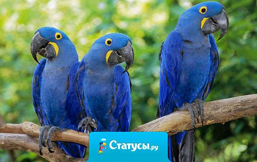 Группа потерявшихся в джунглях русских туристов была найдена по матерящимся попугаям.