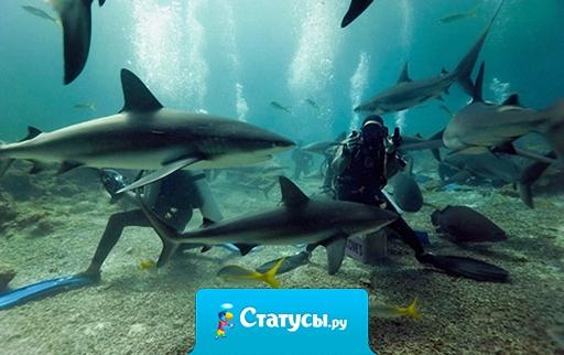 Египетские акулы видели многое. Но русских со словами