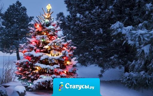 На Новый Год сяду под елку и буду ждать пока кто-нибудь будет рад такому подарку.