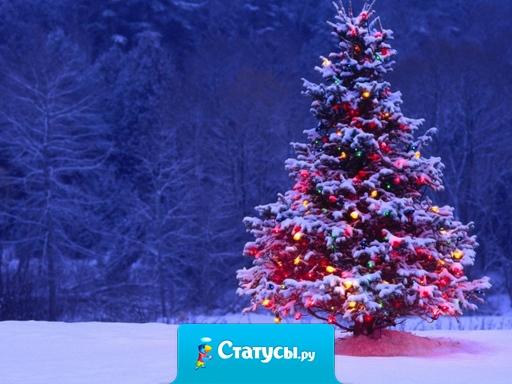 Холодный ветер, морозный вечер, узоры на стекле, снежинки во дворе, скрипучий снег под ногами, зима... И наконец-то Новый Год!