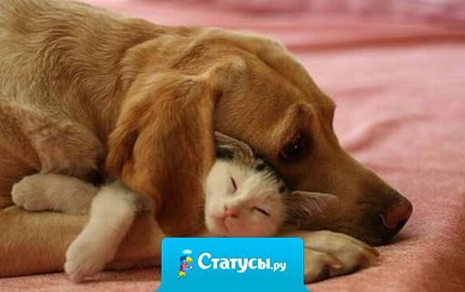Настоящая дружба - это когда ты идёшь по улице, спотыкаешься и падаешь, а твоя подруга ржёт и падает с тобой рядом!