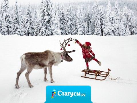 Дедушка Мороз, я очень тебя прошу, давай в 2016 году без оленей.
