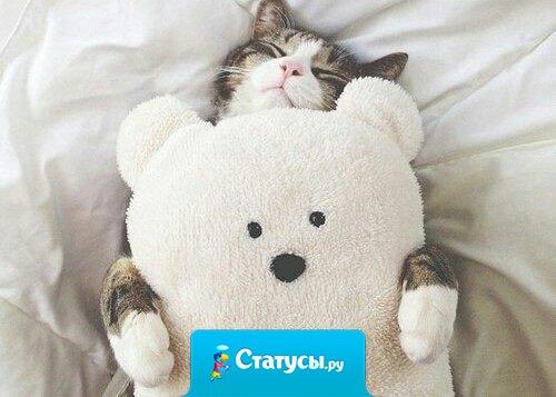 Коты – это ценнейший ресурс. Они уют вырабатывают.