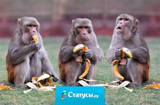 Следующий 2016 год - год Обезьяны! И, судя по ценам, жить мы будем на деревьях, ходить с голой жопой и питаться банановой кожурой!