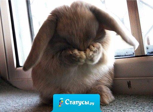 Когда вы видите у меня грустные статусы - значит... дома нет конфет!