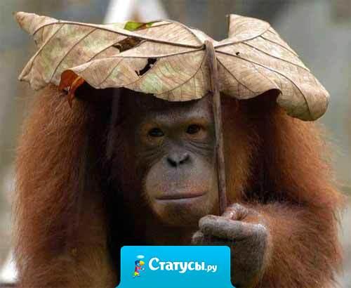 В июне в куртке ходила... В декабре с зонтом хожу... Скорей бы январь - сарафан хочется надеть...