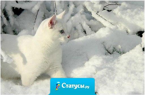 В чудеса я по-прежнему верю, Пусть звучит это странно весьма… А по улочкам, тропкам и скверам Белой кошкой крадётся Зима.
