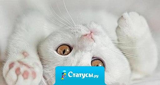 Кошки — это вам не люди, они ни за что не станут спать с теми, кого не любят...