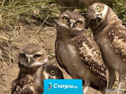 Так выглядят мои подруги, когда я говорю, что завязала с алкоголем!!