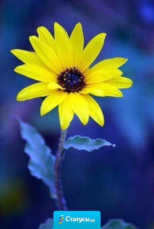Есть три проявления Бога на земле: природа, любовь и чувство юмора. Природа помогает жить, любовь помогает выжить, а чувство юмора пережить.