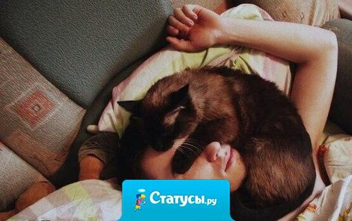 Семейное положение: сплю с котом