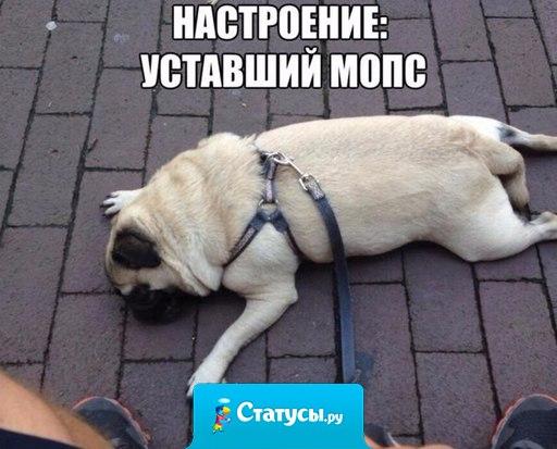 Настроение: уставший мопс