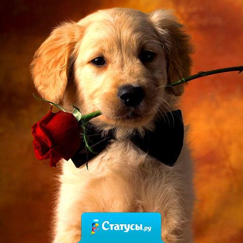 Я не доверяю людям, которые не любят собак, но я доверяю собаке, когда ей не нравится человек…