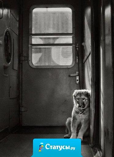 Собака - друг человека! Не бросайте друзей...