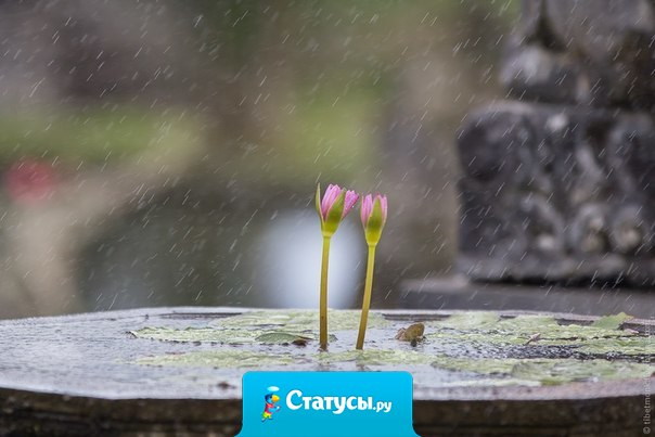 Тот, кто говорит, что солнце приносит счастье, никогда не танцевал под дождем.