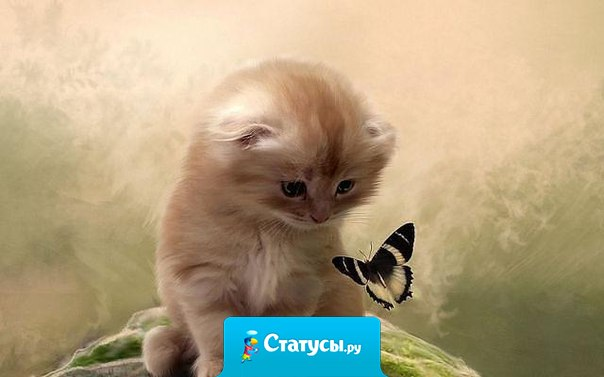 Счастье подобно бабочке. Чем больше ловишь его, тем больше оно ускользает. Но если Вы перенесете своё внимание на другие вещи, оно прилетит и тихо сядет к Вам на плечо.