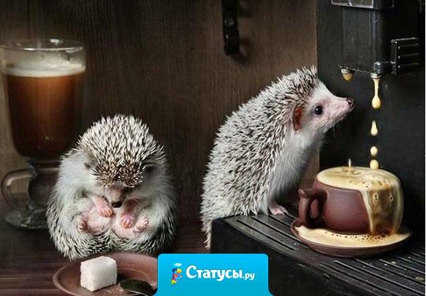 Когда на улице ненастье и неохота выходить, то чашка кофе — просто счастье... и это счастье можно пить!